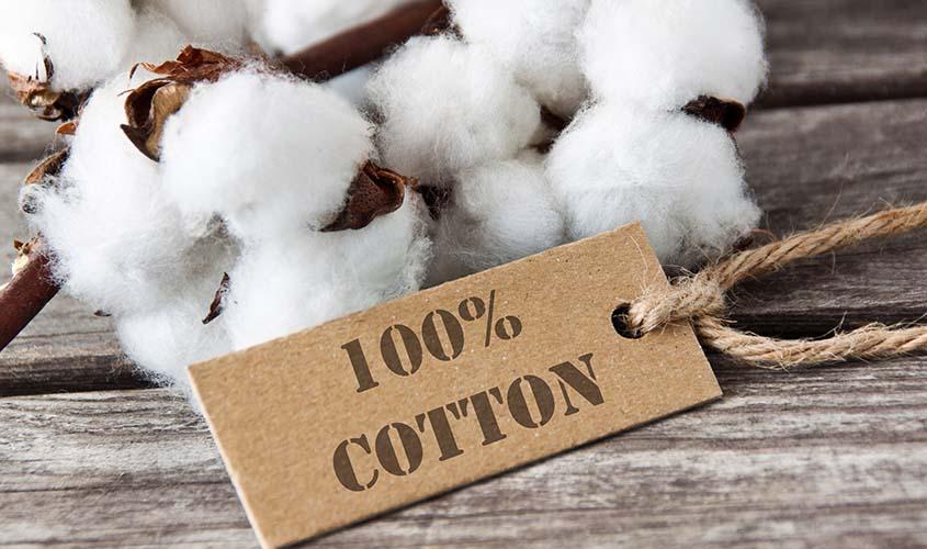 就活用のシャツにふさわしい綿100%